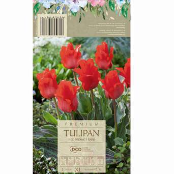 Tulipan Red Riding 12-14 5szt DCO