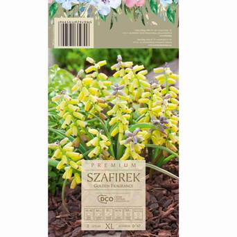 Szafirek Golden Fragrance 9-10 2szt DCO